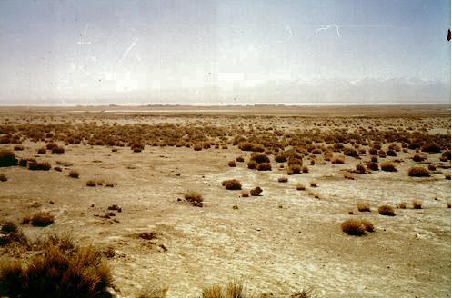 白刺,柴达木盆地的主要植物 察尔汉盐湖,盐的海洋,盐的世界,它总面积